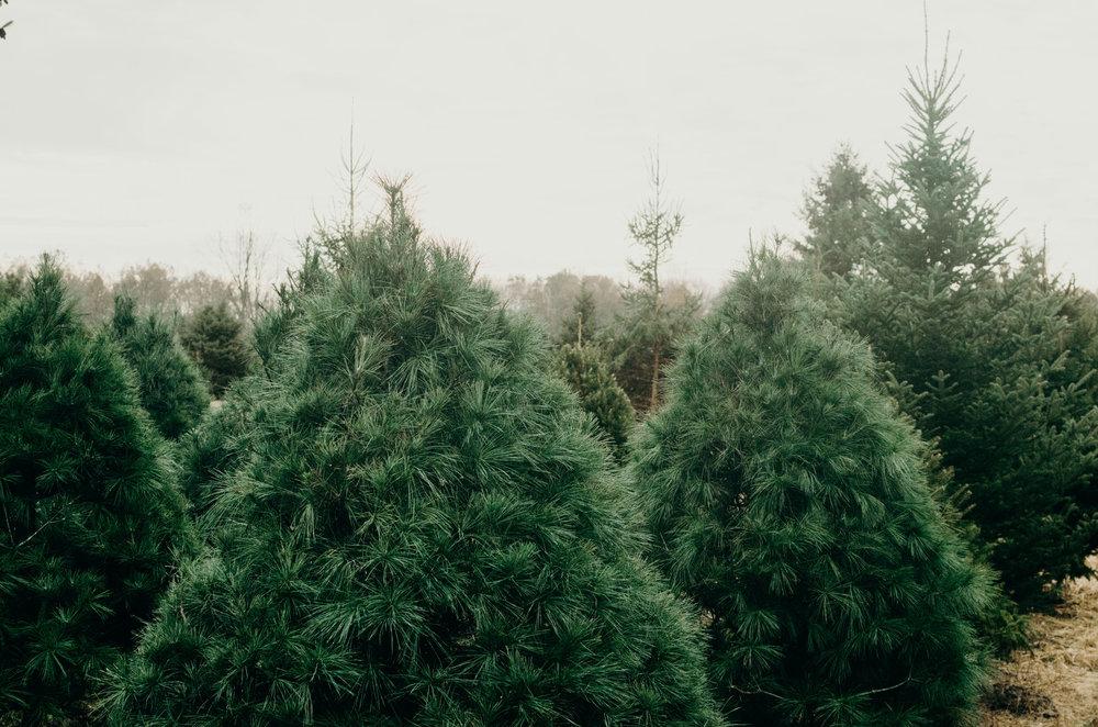 Wendling_Boyd_Tree_Hunt_2017.jpg