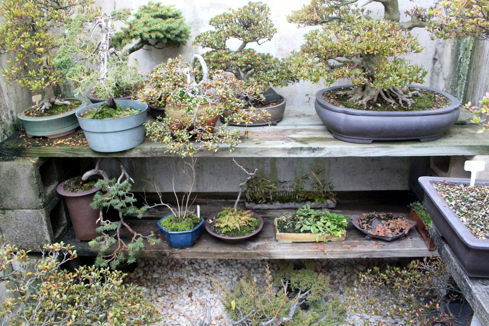 Larger containers are arranged and stored in between bonsai.