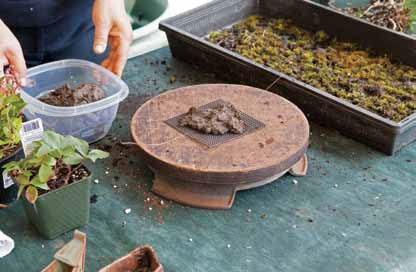Figure 11: Mud ball is secured on bonsai drain screen. The excess screen will be trimmed after the composition is completed.