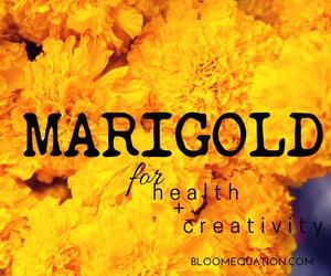 marigold repels mosquitoes