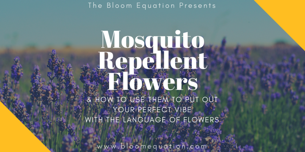 mosquito repellent flowers