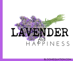 lavender is a mosquito repellent