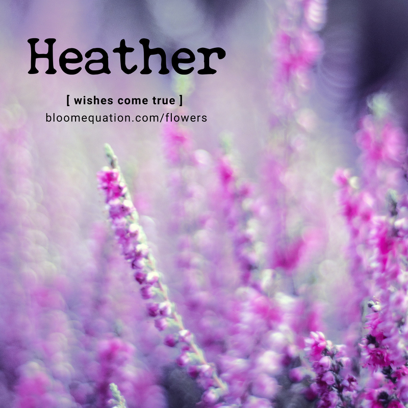 Heather- wishes come true