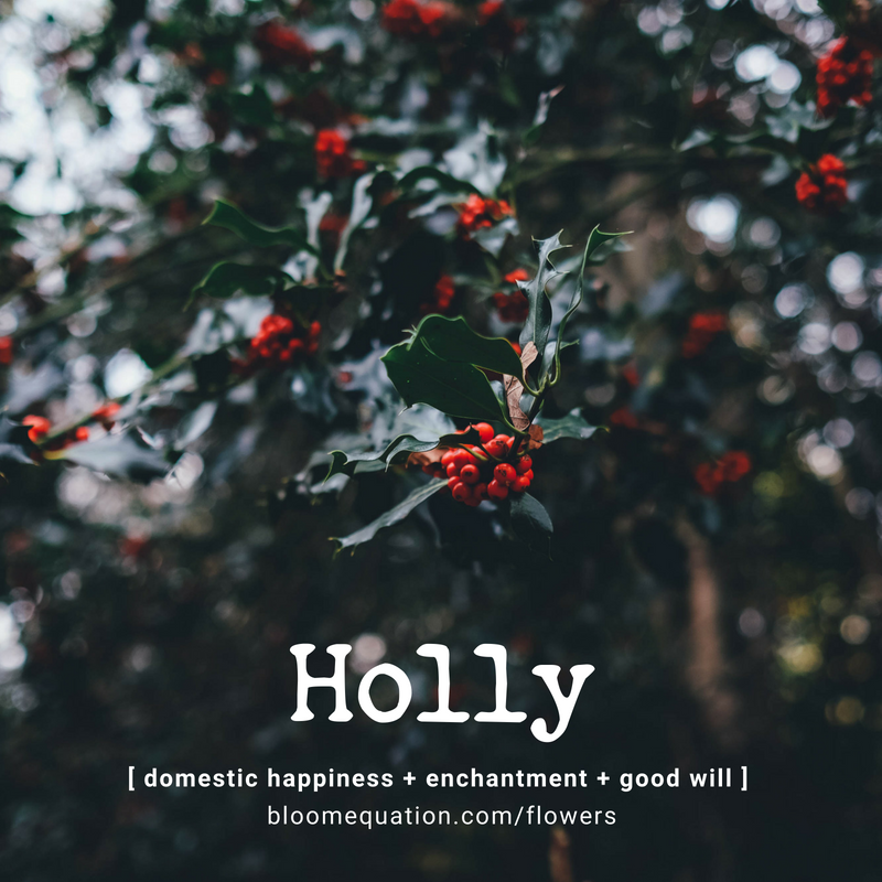 Holly- domestic happiness, enchantment and good will