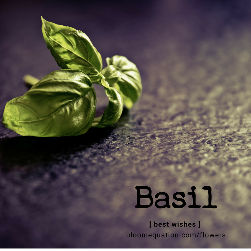 Basil- best wishes