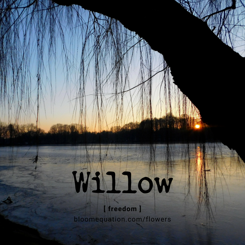 Willow- freedom