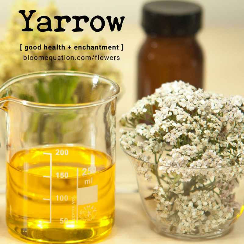 Yarrow- good health and enchantment
