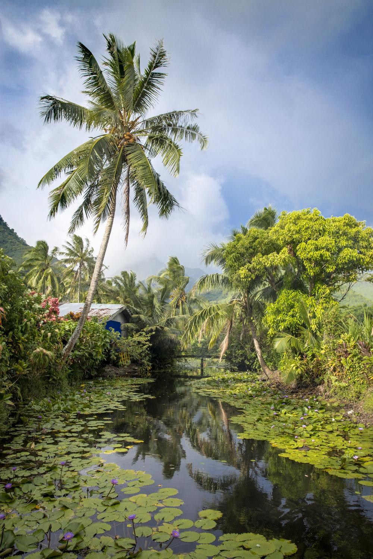TashaVanZandt_TAQ_Tahiti_IMG_8921.jpg