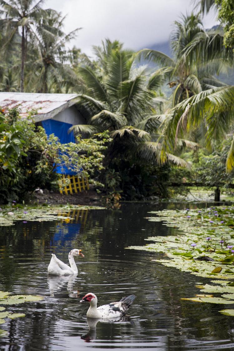 TashaVanZandt_TAQ_Tahiti_BH6A6039_1.jpg