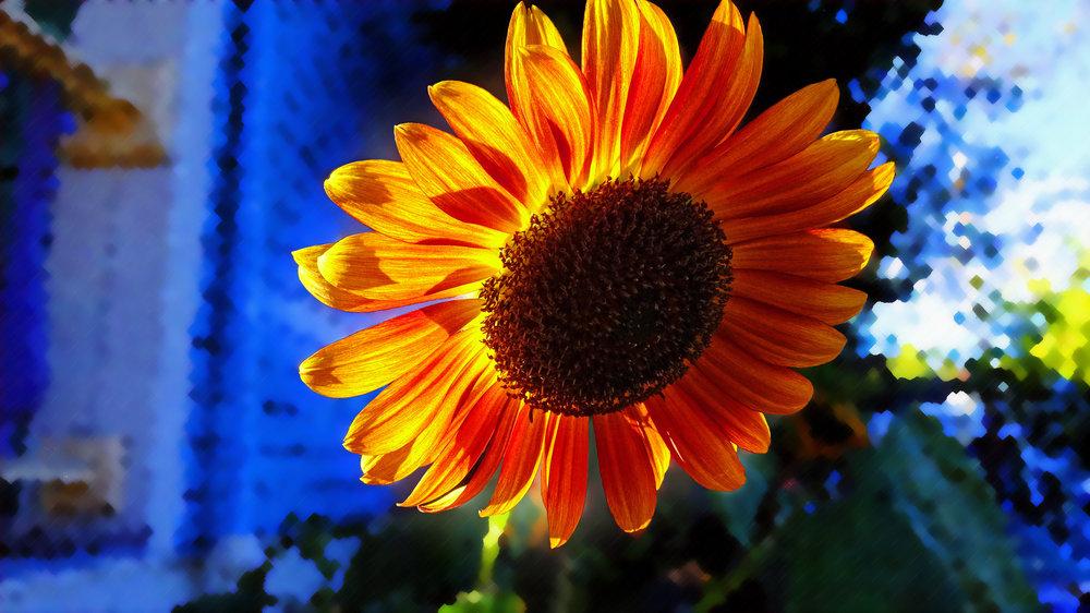 Impressionist Sunflower V2.jpg