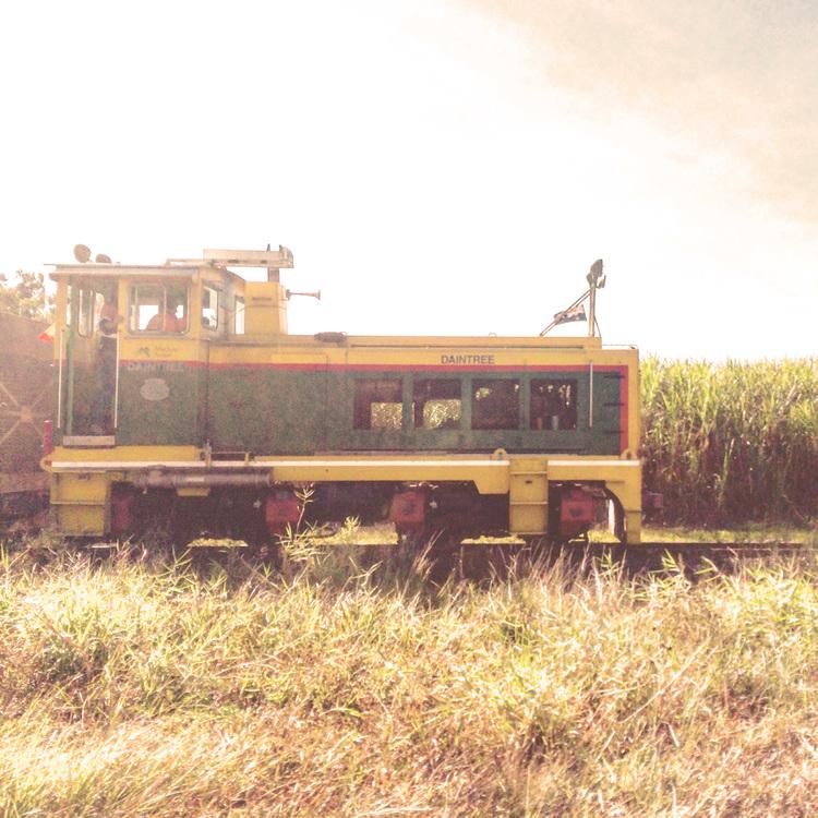 The cane trains
