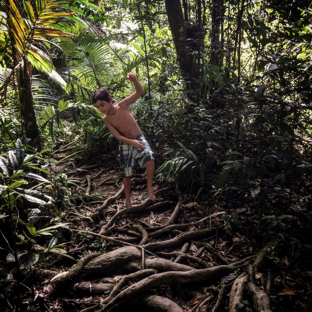 Explore the Daintree Rainforest, just north of Port Douglas