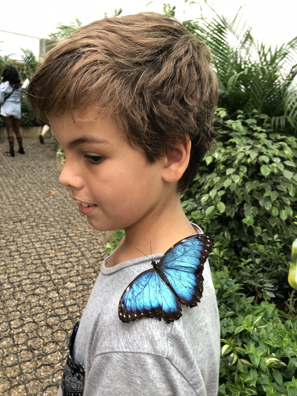 This was so amazing to go to this butterfly garden. It was so extraordinary that I got like 6 butterflies on me. This one was the most fascinating and beautiful one that landed on me. So that was really cool.