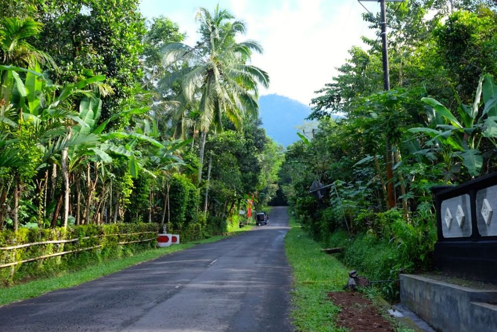 bali 2016 road to temple.jpg