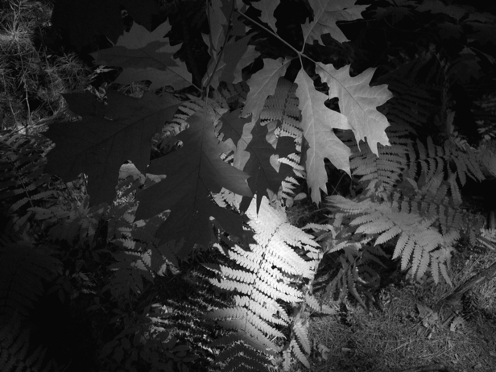 Leaves in Light