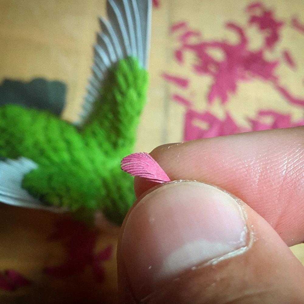 hummingbird13.jpg