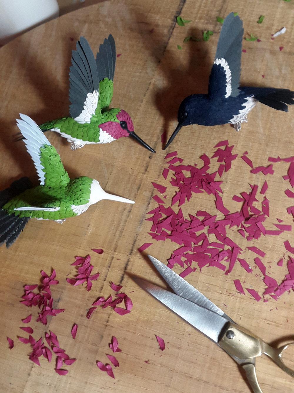 hummingbird11.jpg