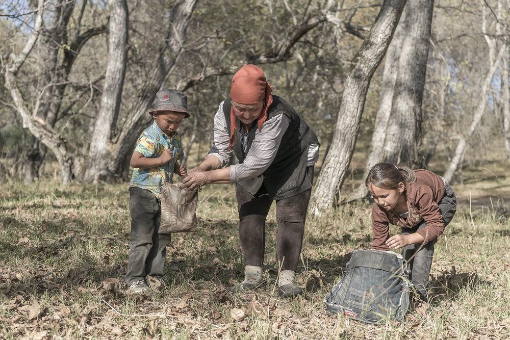 walnut-pickers-arslanbob-kyrgyztan-jo-kearney-photographer-photography-video-cheltenham.jpg