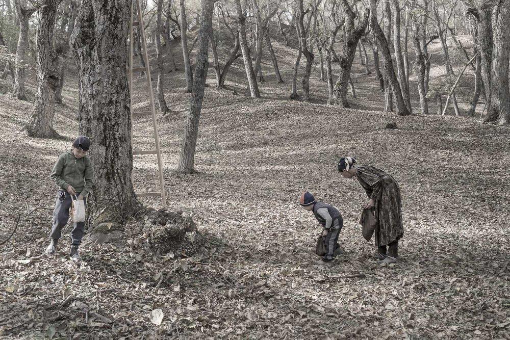 walnut-picking-pickers-arslanbob-kyrgyzstan-families-jo-kearney-photography-video.jpg