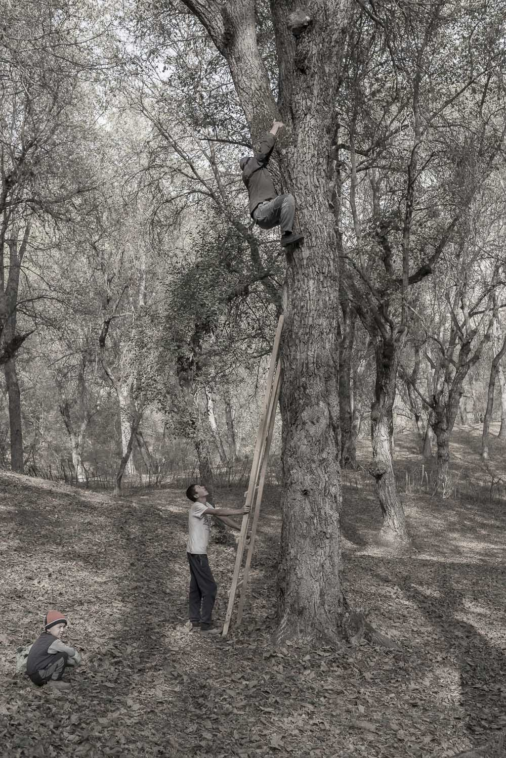 walnut-picking-kyrgyzstan-arslanbob-jo-kearney-photography-video-cheltenham.jpg