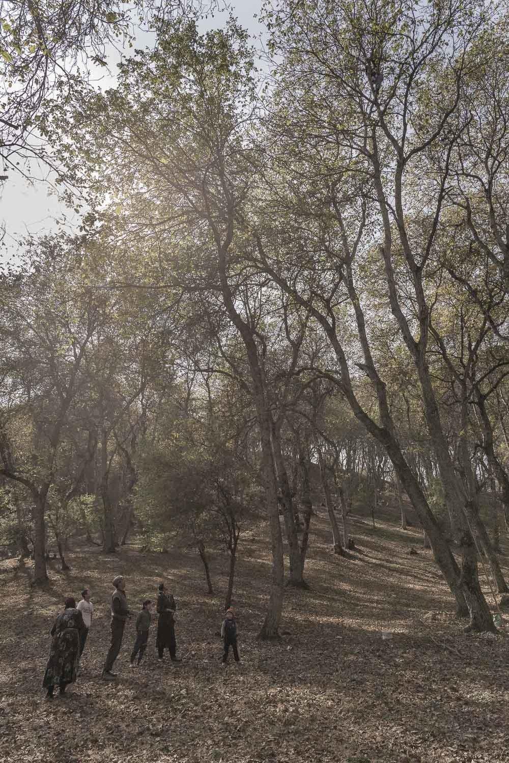 arslanbob-walnut-picking-shaking-trees-kyrgyzstan-jo-kearney-photography-video.jpg