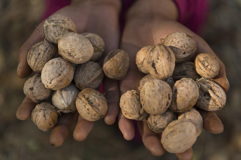 walnuts-handful-of-walnuts-kyrgyzstan-jo-kearney-photography-video.jpg