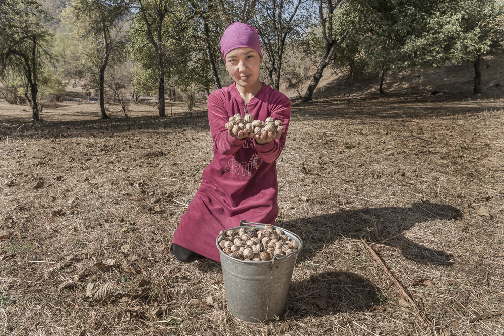 pink walnuts-walnut-picking-jo-kearney-photography-photographer-kyrgyzstan.jpg