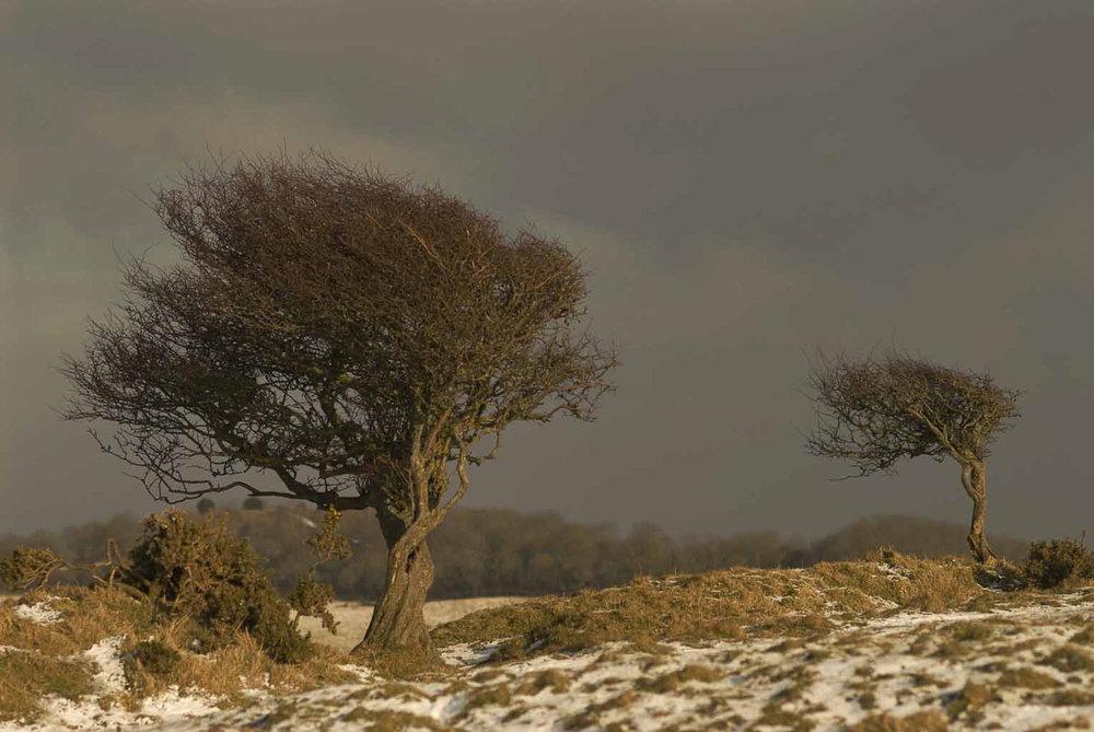 Dorset-landscape-photography-photographer-video-jo-kearney-prints-for-sale-trees.jpg