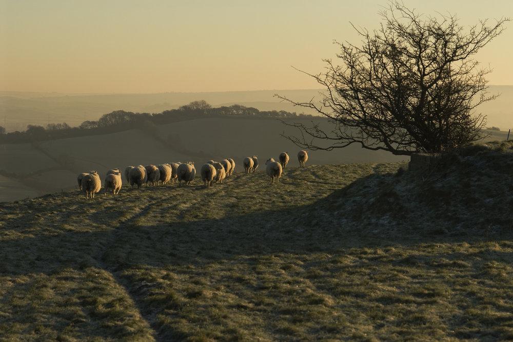 Dorset-prints-for-sale-sheet-jo-kearney-photographer-videographer-landscapephotography-photography-landscapes.jpg