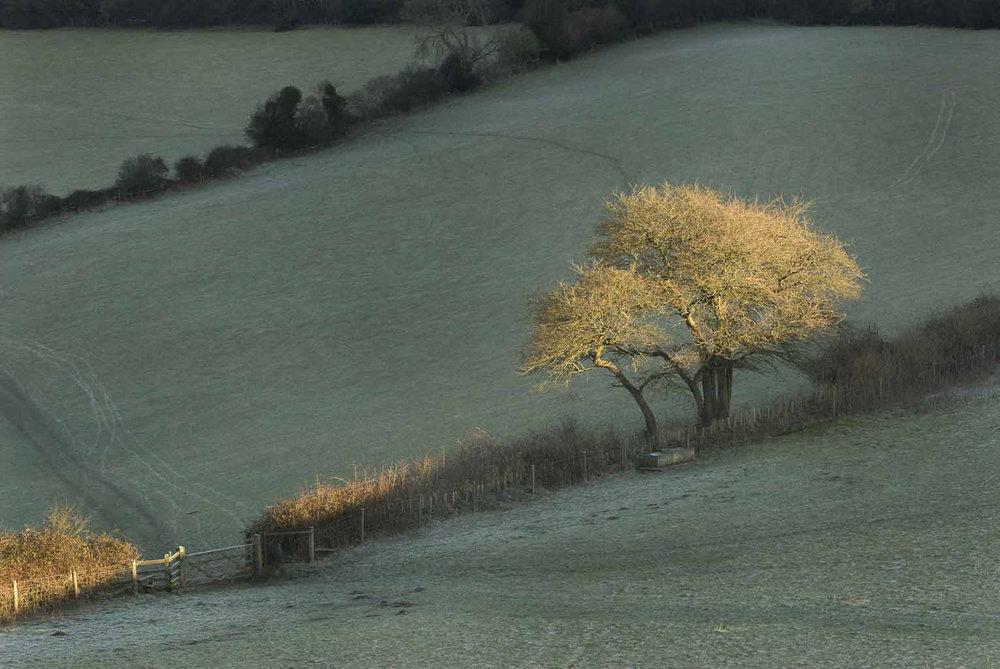 dorset-landscapephotography-landscapes-winter-jo-kearney-videographer-photographer-prints-forsale.jpg