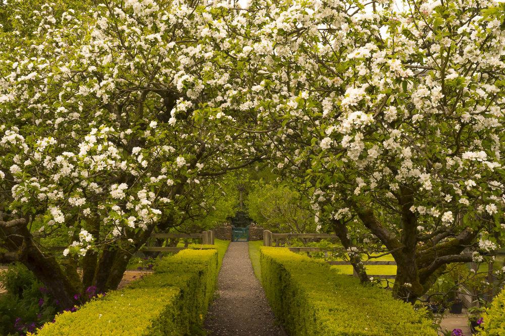 blossom-Gloucestershire-Jo-Kearney-photos-landscape-photography-video-landscapes.jpg