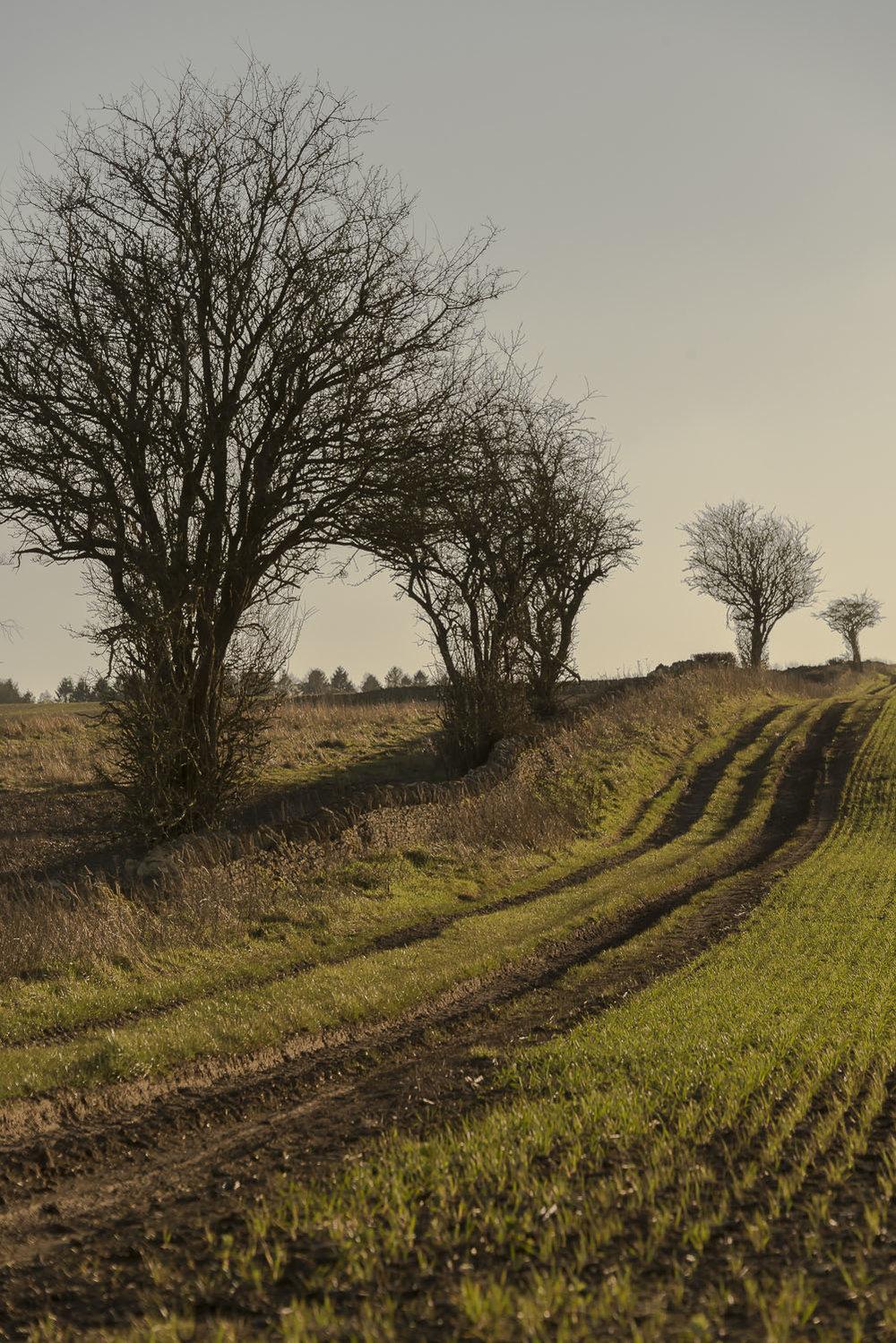 trees-winter-Gloucestershire-Jo-Kearney-photos-landscape-photography-video-landscapes.jpg