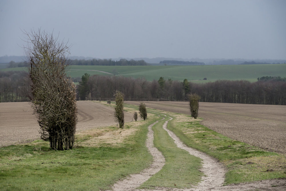 Ridgeway-path-Oxfordshire-Jo-Kearney-photos-landscape-photography-video-landscapes.jpg