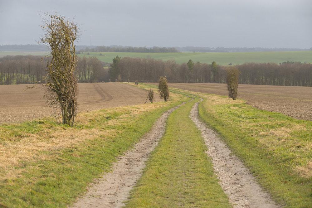 Ridgeway-Oxfordshire-Jo-Kearney-photos-landscape-photography-video-landscapes.jpg