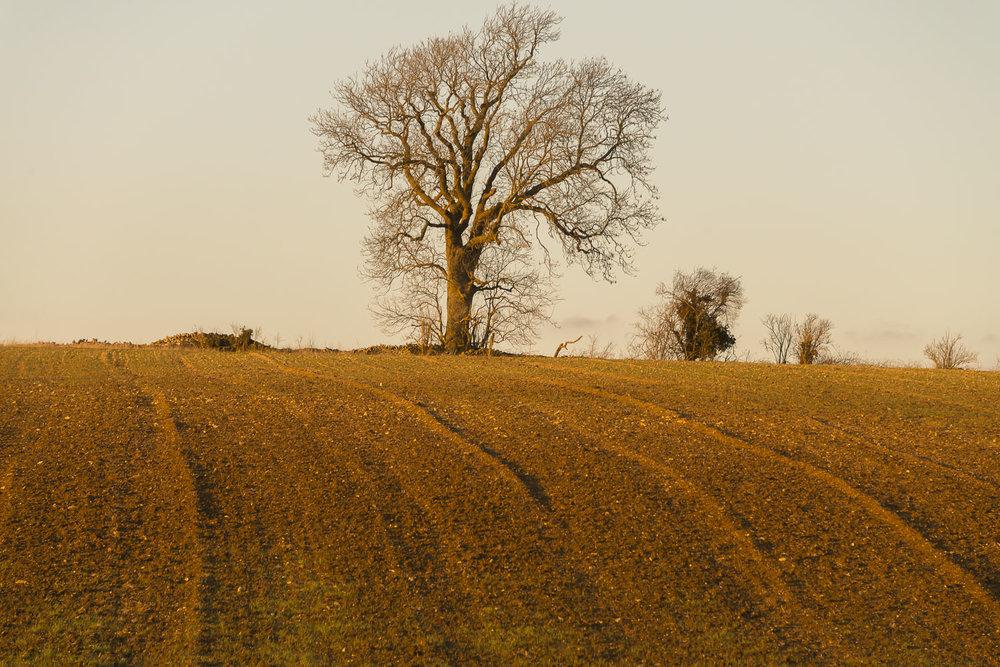 golden-light-winter-fields-Gloucestershire-Jo-Kearney-photos-landscape-photography-video-landscapes.jpg