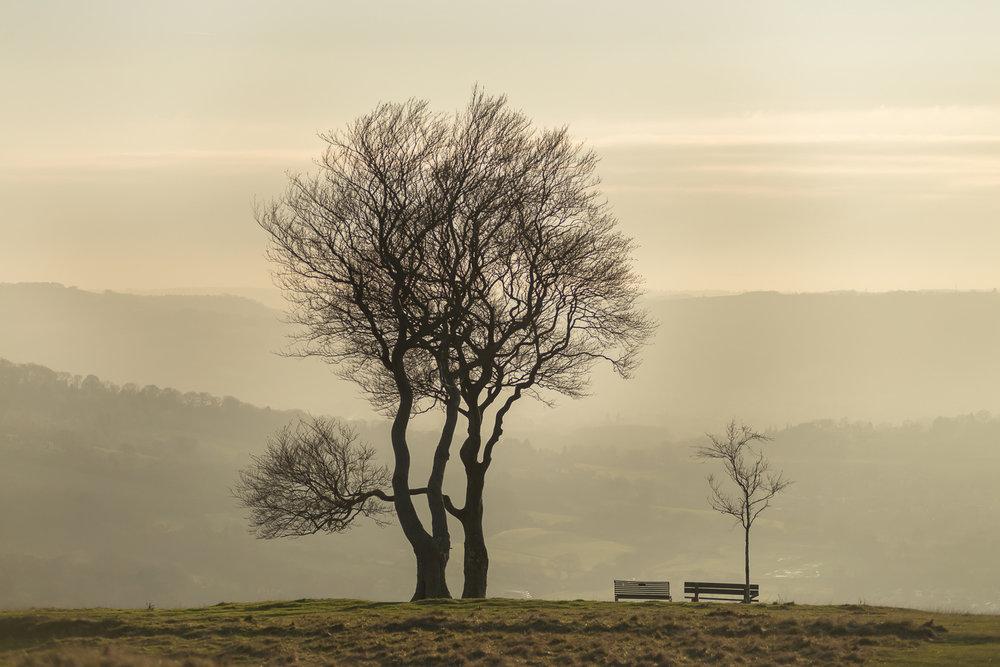 trees-Cleeve-Hill-winter-Gloucestershire-Jo-Kearney-photos-landscape-photography-video-landscapes.jpg