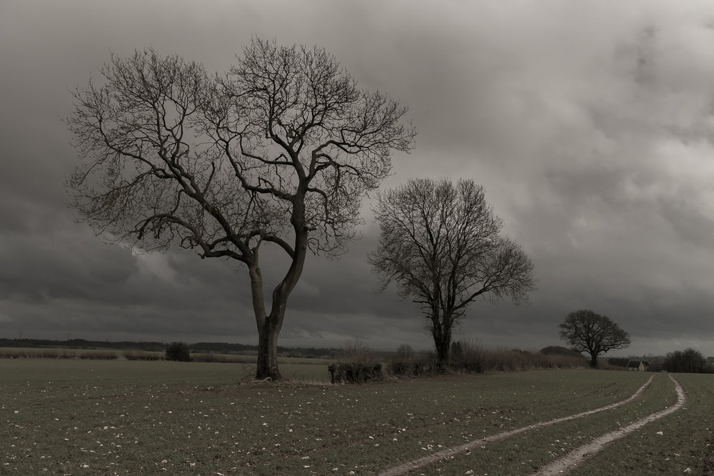 trees-winter-fields-Gloucestershire-Jo-Kearney-photos-landscape-photography-video-landscapes.jpg