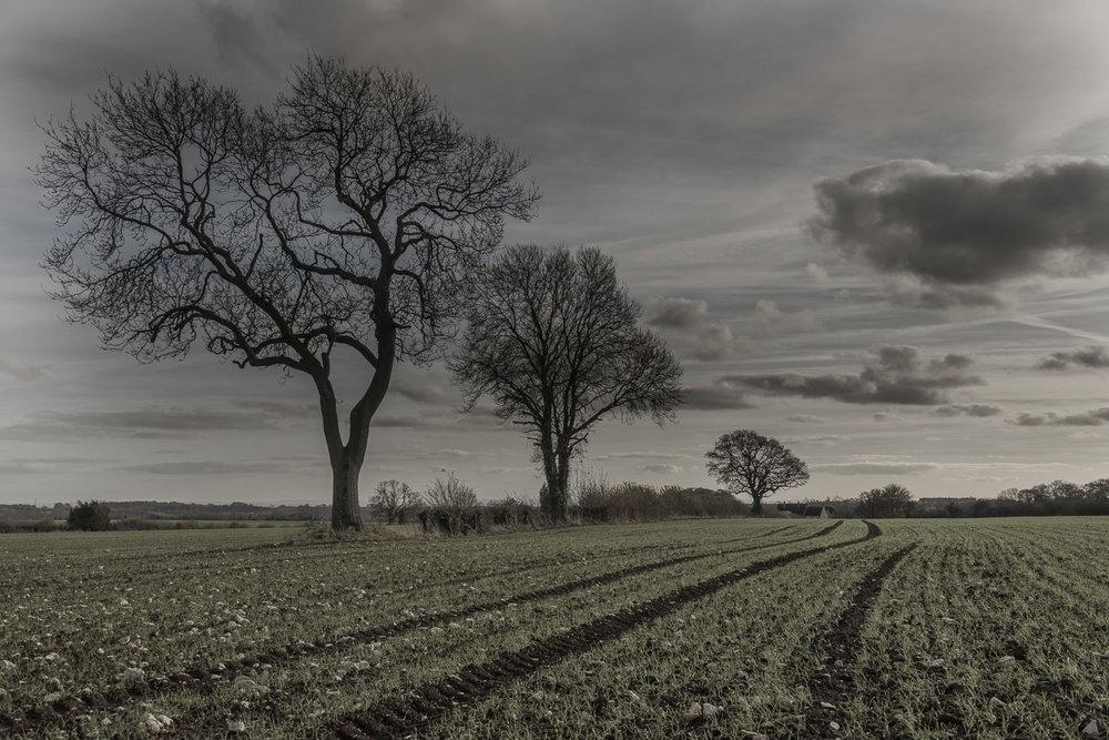 winter-fields-Gloucestershire-Jo-Kearney-photos-landscape-photography-video-landscapes.jpg