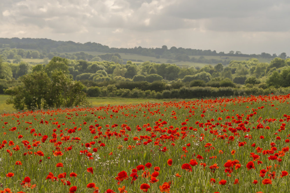 scenery-poppies-Gloucestershire-Jo-Kearney-photos-landscape-photography-video-landscapes.jpg