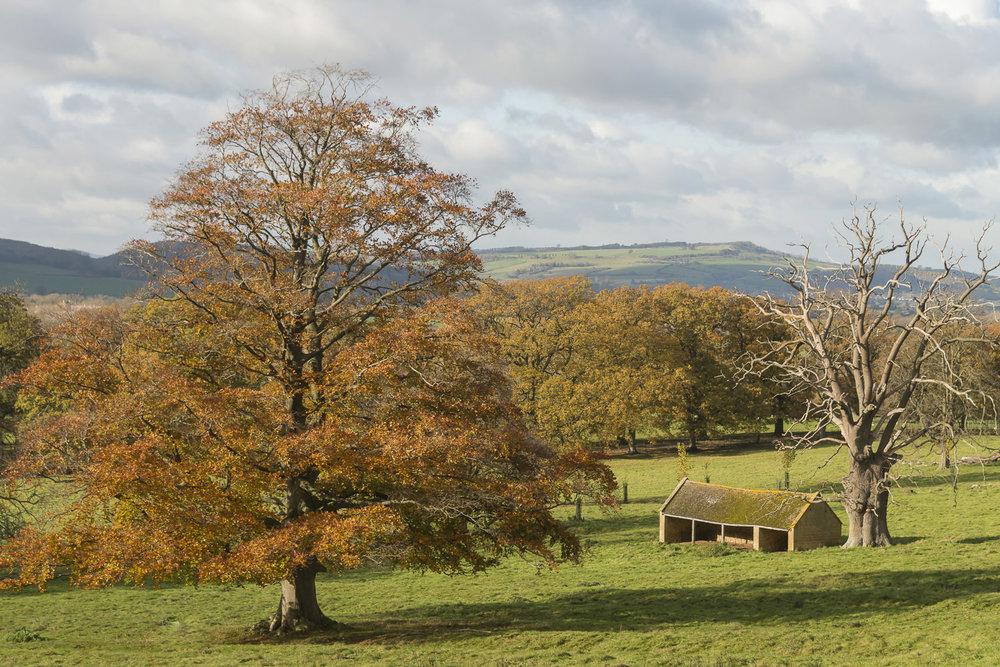 Autumn-Stanway-Gloucestershire-Cotswolds-Jo-Kearney-photos-landscape-photography-video-landscapes.jpg