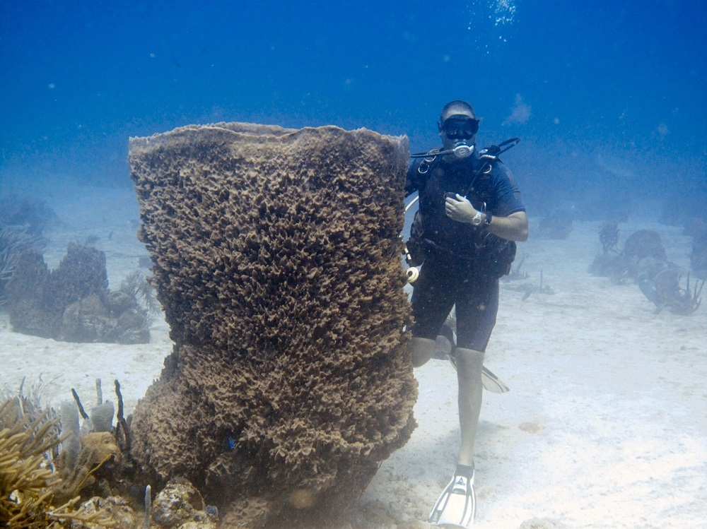 World's largest Barrel Sponge