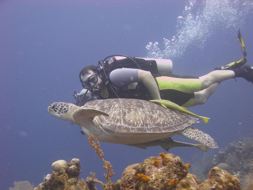 diver george n turtle.jpg