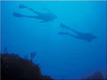 Cruise ship Scuba Diving Excursions on Roatan | West End Divers
