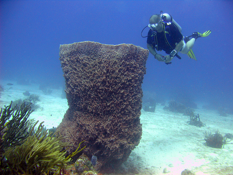 The BIG SPONGE  Photo -  Mickey Charteris