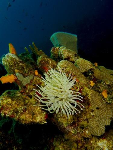 Underwater Scenery, Roatan Reef