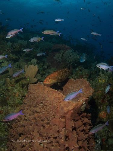 Underwater scenery at Texas