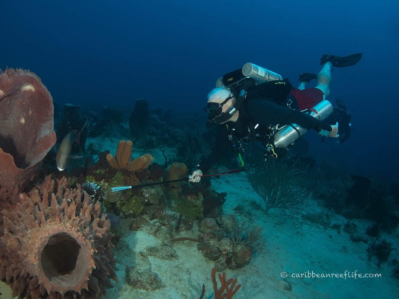 Lionfish Hunting with CCR