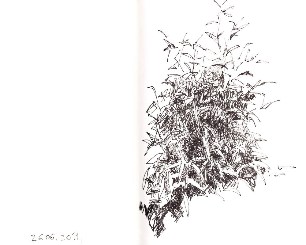 26.06.2011
