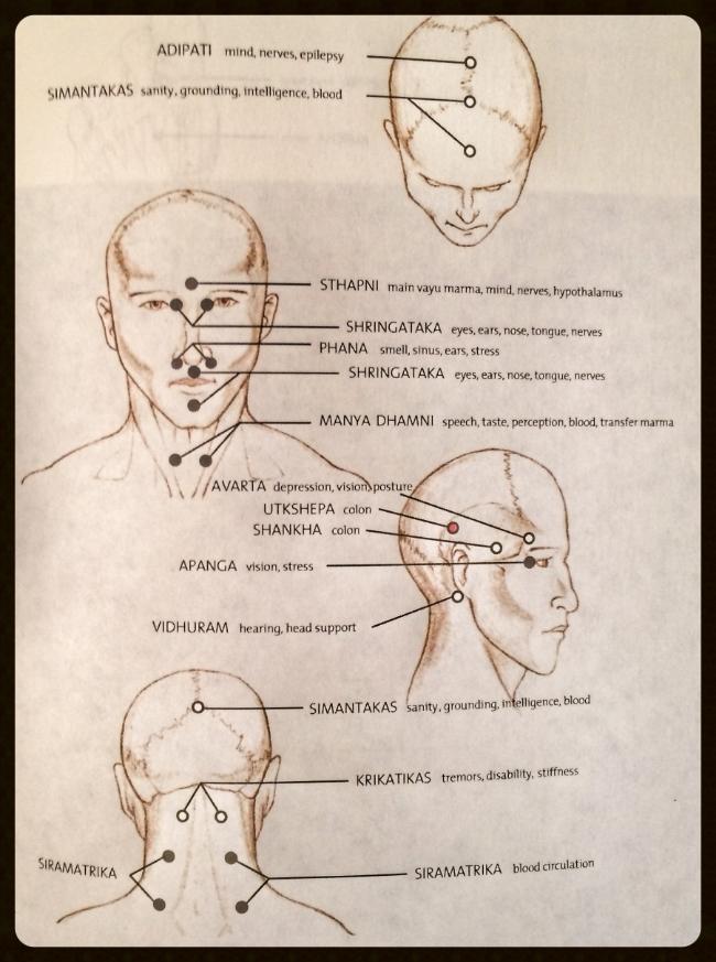 Ayurveda marma points pdf of