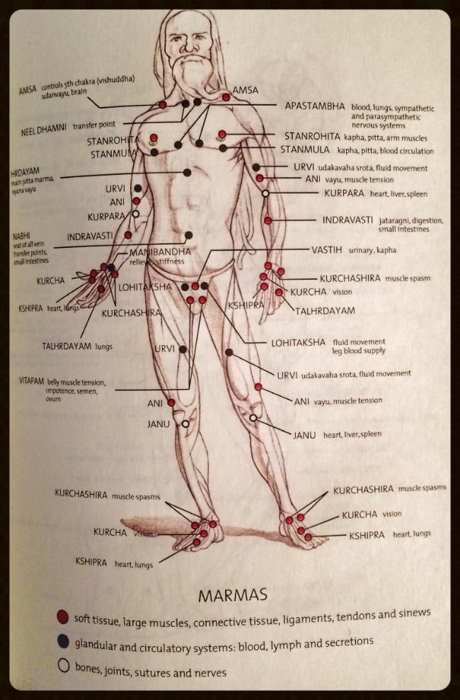 Ce graphique ainsi que les suivants indique les positions des Marmas (points vitaux) tels que conçus et développés par le grand sage du Sud de l'Inde Agastya, et dont l'étude est fortement recommandée par deux classiques: le Yogayajnavalkya Samhita et le Vasishta Samhita.